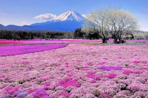 日本枫叶季7天6晚游