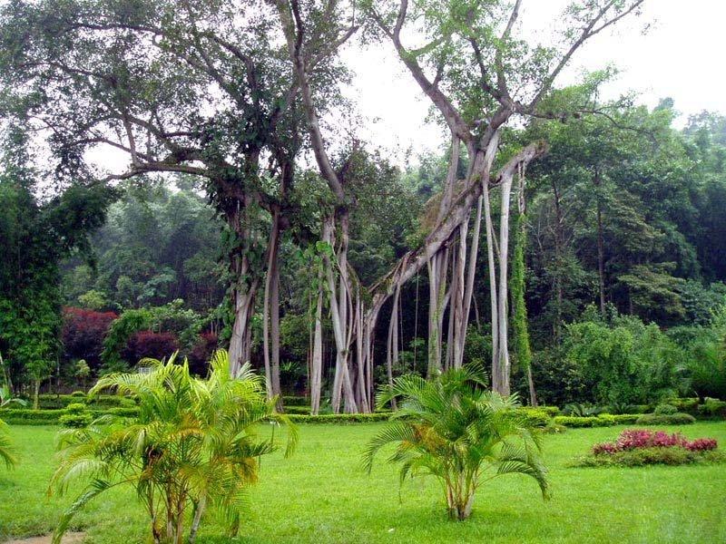 野象谷、原始森林公园、勐泐大佛寺三晚四日游